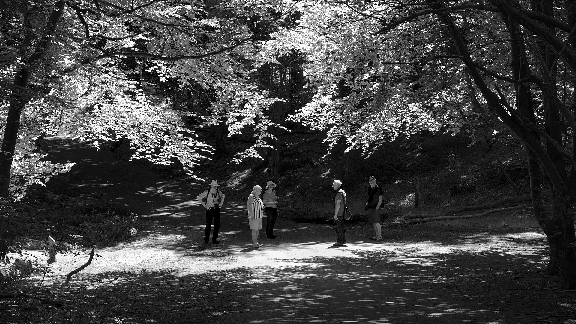 Photography group visits Burnham Beeches
